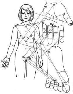 Sujok schéma a akupunktúra mikrosystémov.