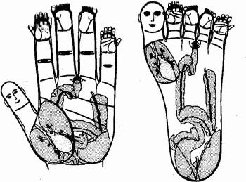 Su-Jok projekcie na dlan a chodidlo
